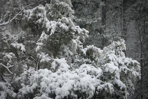 Got Snow? We Do! by CarlMillerPhotos