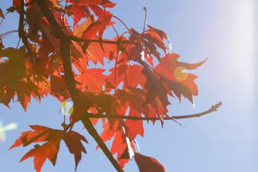Fall Sunspots by CarlMillerPhotos