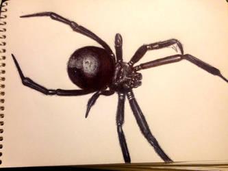 Spider by Pmokona