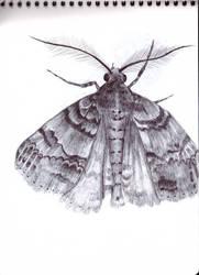 A moth by Pmokona