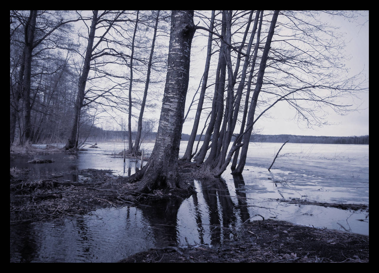 Trees by the Spring Lake by Pajunen