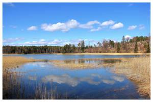 Northern Spring by Pajunen