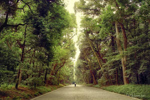 On the road to Meiji Shrine by Pajunen