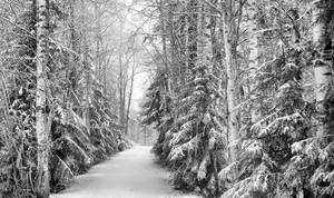 Frozen by Pajunen
