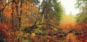 Autumn Forest by Pajunen