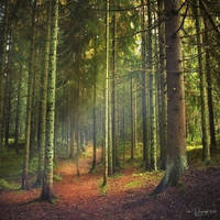 Path through the trees by Pajunen