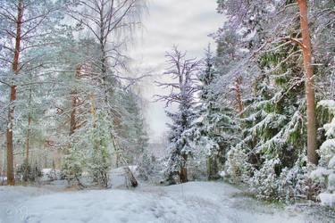 November trees by Pajunen