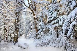 Cold Season by Pajunen