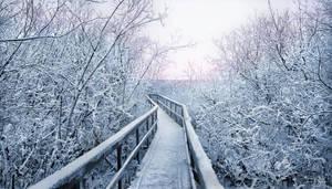 Frozen Path by Pajunen