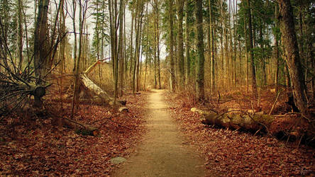 Path of the Fallen Trees by Pajunen