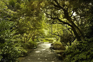 Shinjuku Gyoen Garden II by Pajunen