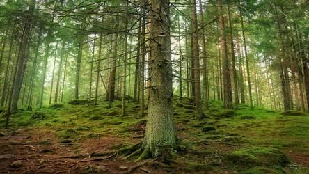 Trees Around Us by Pajunen