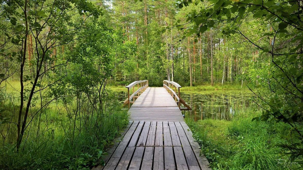 Wooden Bridge by Pajunen