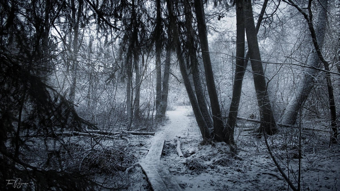 The Edge of the Forest by Pajunen