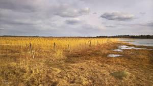 Wetlands by Pajunen