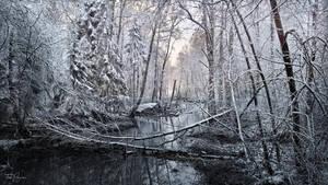 Winter Brook by Pajunen