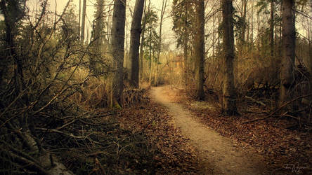 Path of the Fallen Trees III by Pajunen