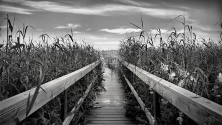 Down the Aisle by Pajunen