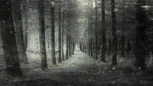 They choose the path where no one goes, reprise by Pajunen