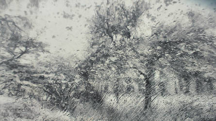 Tree in Blizzard by Pajunen
