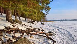 February seashore by Pajunen
