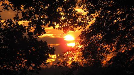 Sunrise through the trees by Pajunen