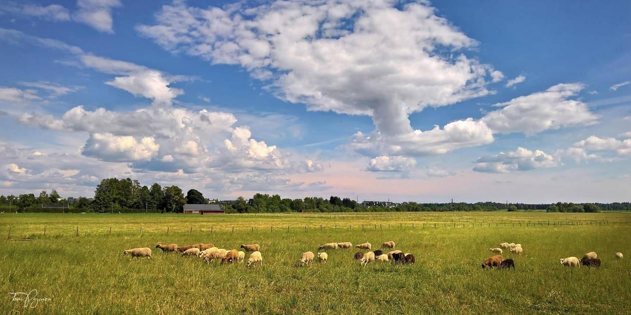 Rural Helsinki by Pajunen