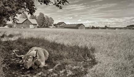Rural Helsinki II by Pajunen