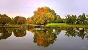 Autumn Pond by Pajunen