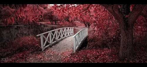 Crimson Fall by Pajunen