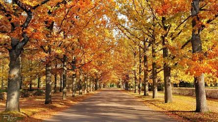Autumn Road by Pajunen