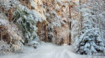 Snowy December by Pajunen