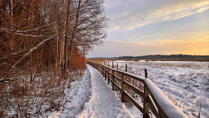 December day by Pajunen