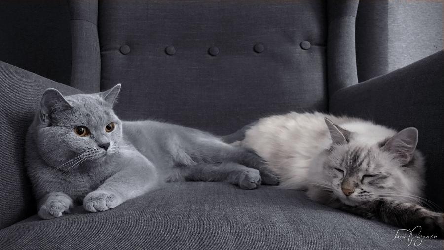 Aino and Maisa by Pajunen