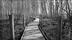 Swamp by Pajunen