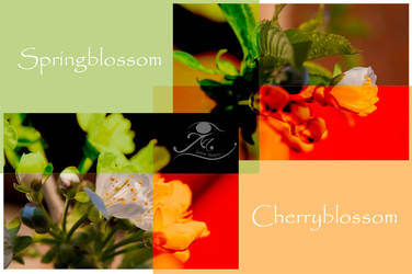 Cherry Card by Usagi-Atemu-Tom