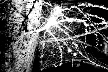 Glowing spiderweb by Usagi-Atemu-Tom