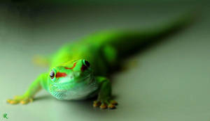 Gecko says Hello by RotWine