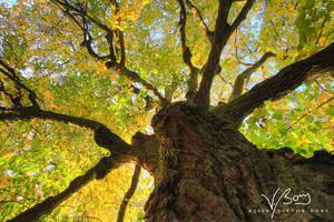 Autumns Claw by gummaid