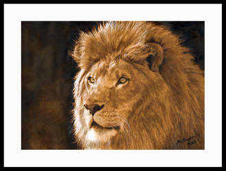 Lion by photospider