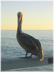 Pelican by AmazonHeathen