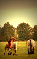 Stallions. by chocolateXtherapy
