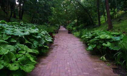 Alley in Neskuchny Garden by EldarZakirov