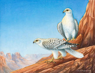 Gyrfalcon Canyon by WaryCassowary