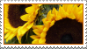 sunflower stamp by thebluemaiden