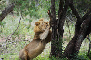 They're still cats - KNP, South Africa by Paddy16