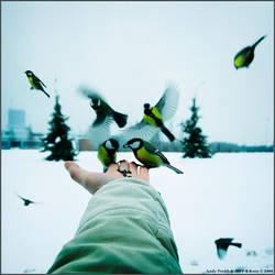 Birds eat by jane-art