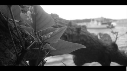 Leafy by Deniz-Ay