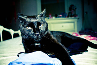 Black Puss by Deniz-Ay