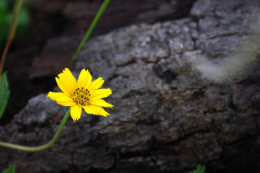 Small Yellow flower by BengLim